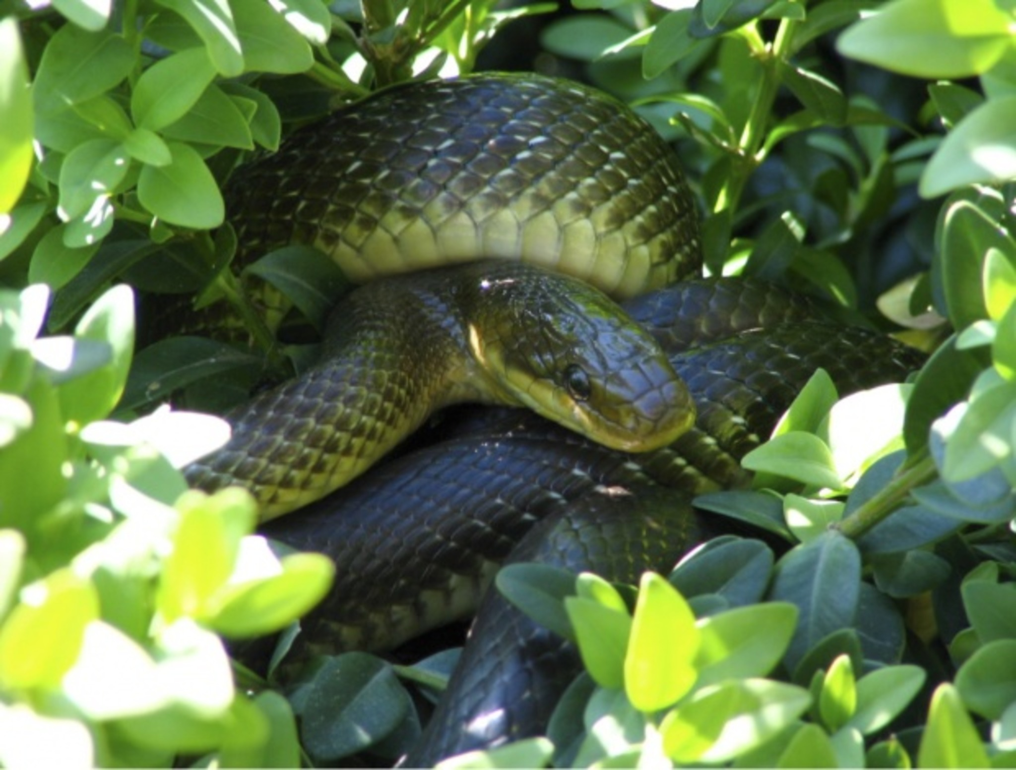 Schlangen Forum
