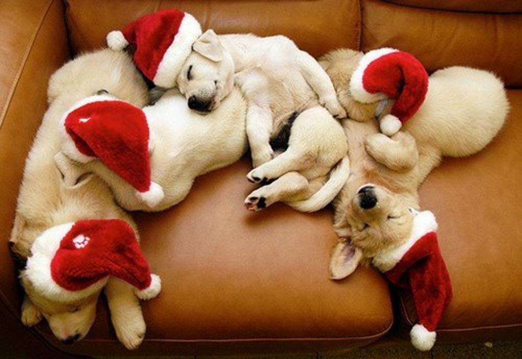 Herzliche Weihnachtswünsche.Herzliche Weihnachtsgrüße Korneuburg