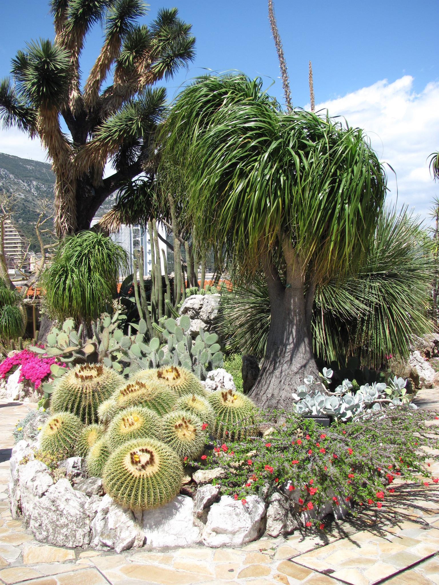 Exotischer Garten In Monaco Tulln