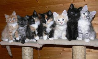 Die süßen Kätzchen hoffen auf ein neues liebevolles Zuhause.