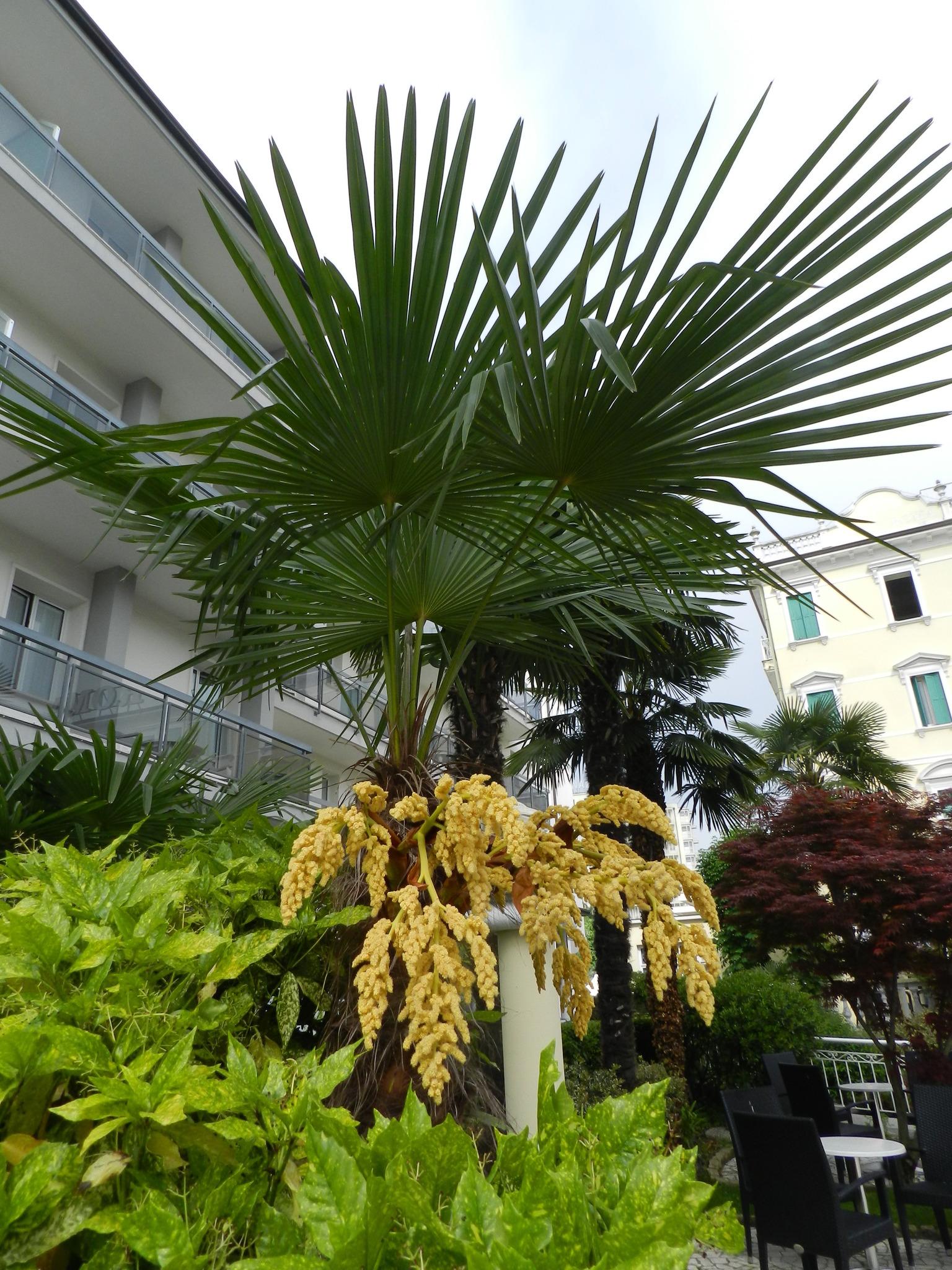 Palmen Blüten