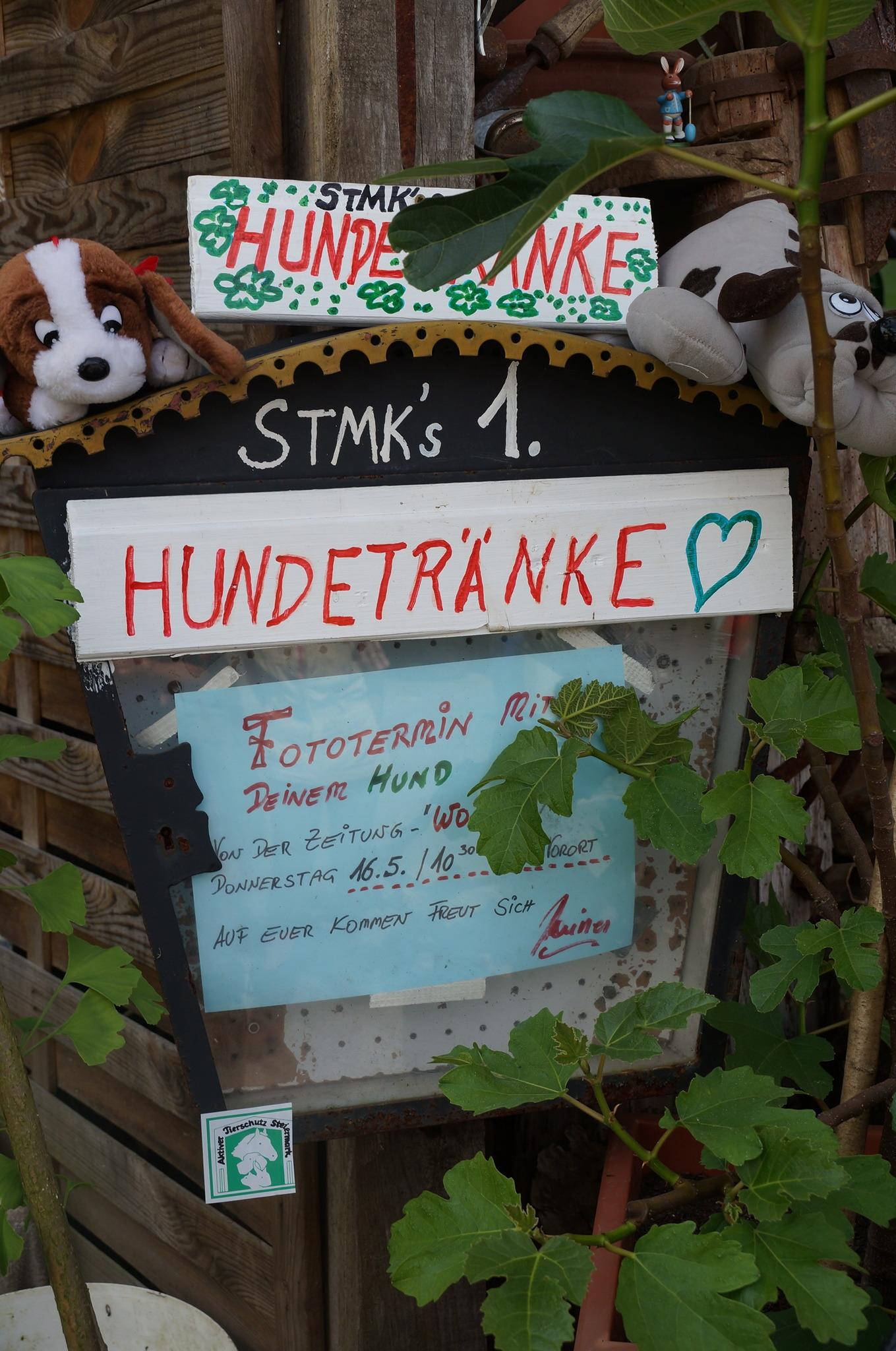 Ein Herz für durstige Vierbeiner - Graz-Umgebung