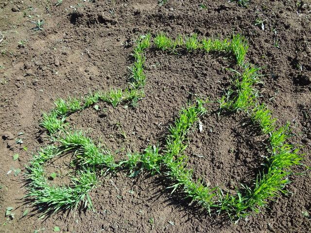 wie wird aus dem samenkorn eine pflanze  kirchdorf