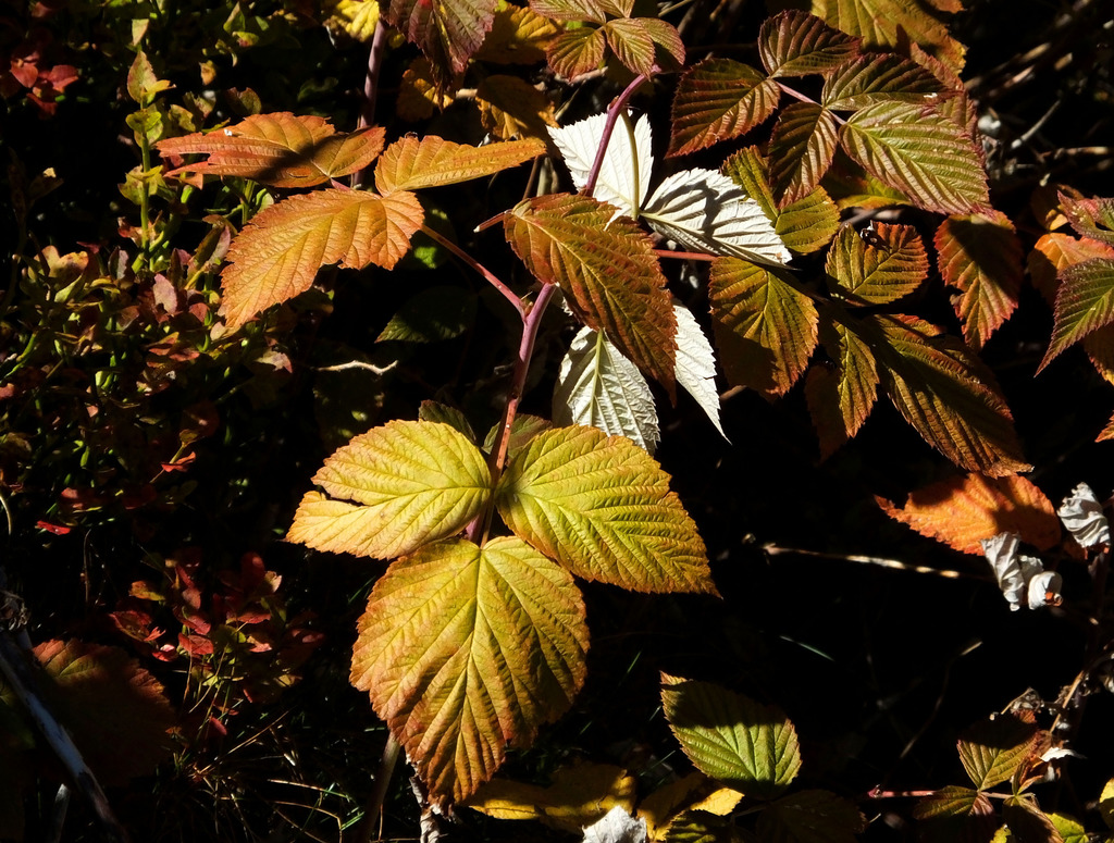 Die Blätter färben sich - Tennengau
