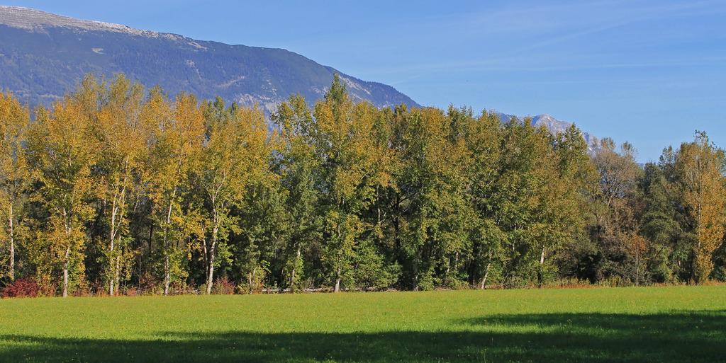 Bald färben sich die Blätter der Bäume wieder\