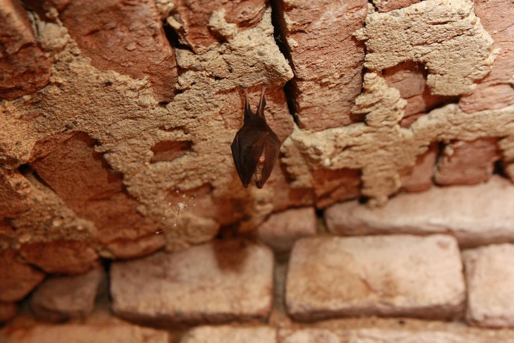 Die Maus Die Bei Uns Im Keller Hangt Sudoststeiermark