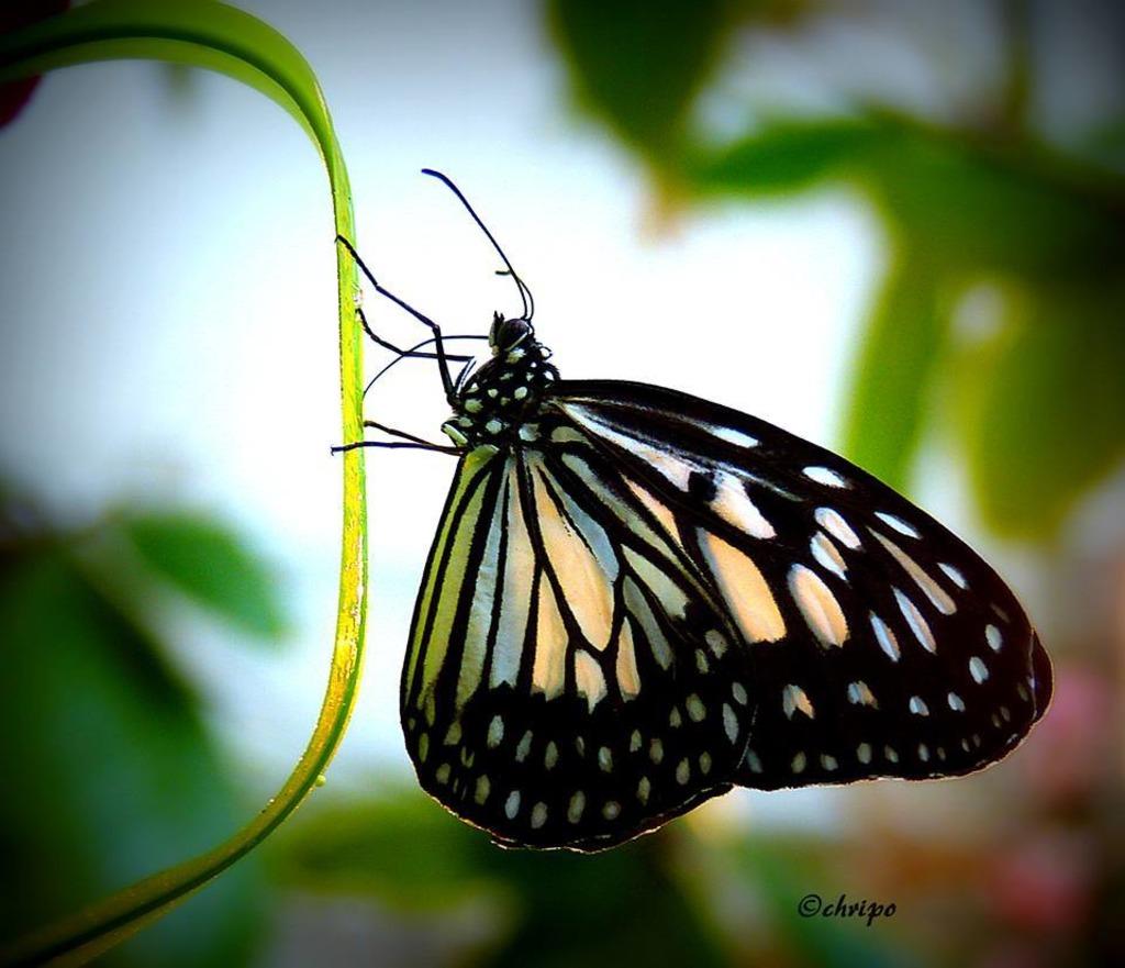 Der Schmetterling Mein Gedicht Ottakring