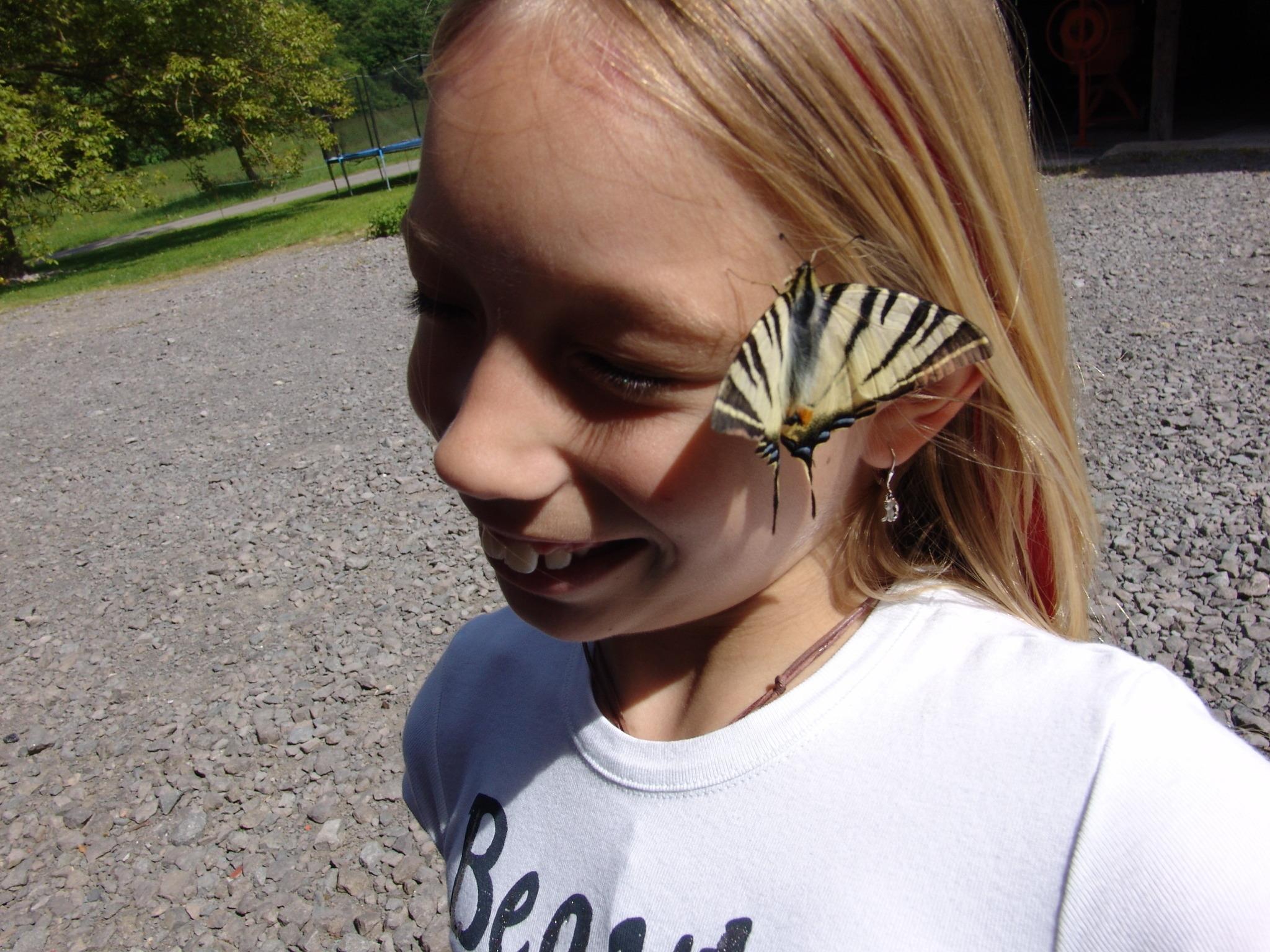 Zebra Schmetterling Sudoststeiermark