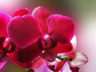 orchideen am fenster. Black Bedroom Furniture Sets. Home Design Ideas