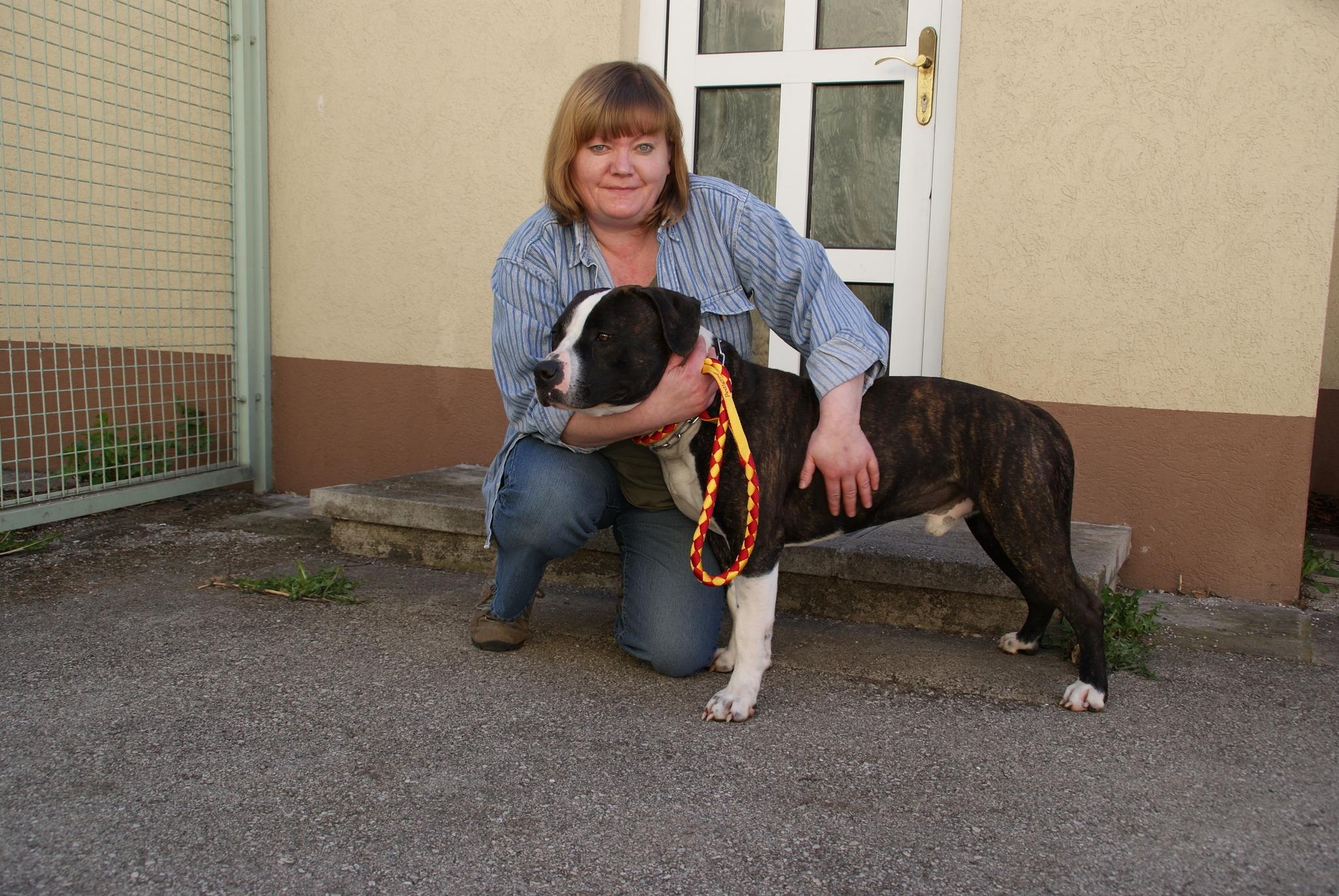 Das Geschäft Mit Den Hundewelpen Wiener Neustadt