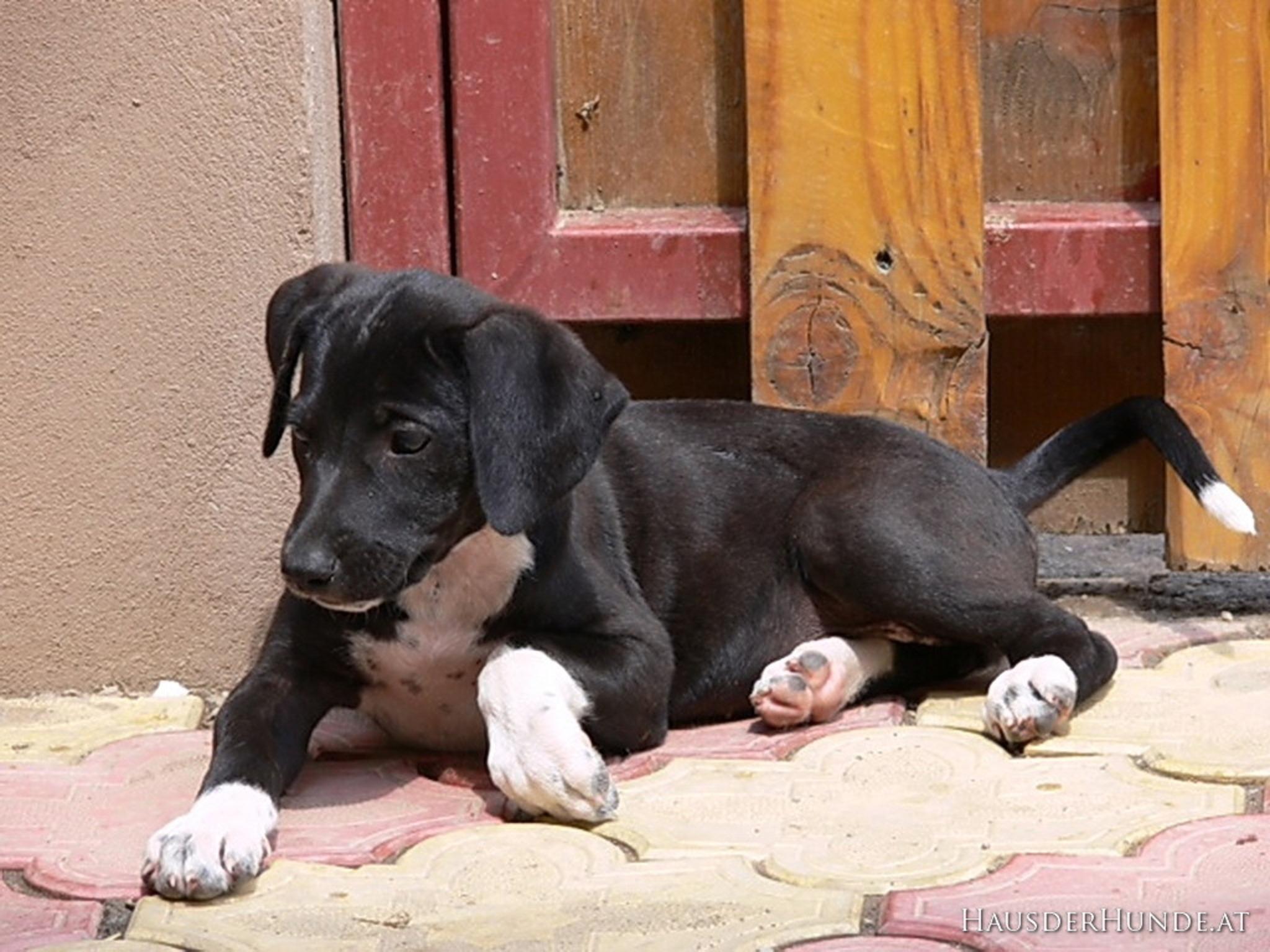 Partnerb rse f r alle die Hunde lieben