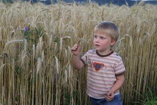 Diesen Sommer-Schnappschuss von seinem Enkel Tobias stellte Michael Thomasberger als Regionaut auf die BezirksRundschau-Webseite. Er entstand in einem Weizenfeld in Eidenberg.