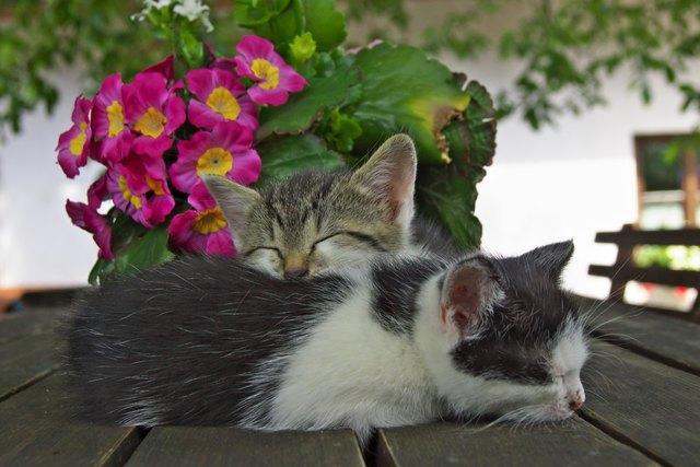 Gute Freunde sind ein bisschen gleich----und ein bisschen