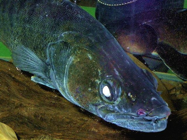 Mit Zonker auf Raubfische Schwechat