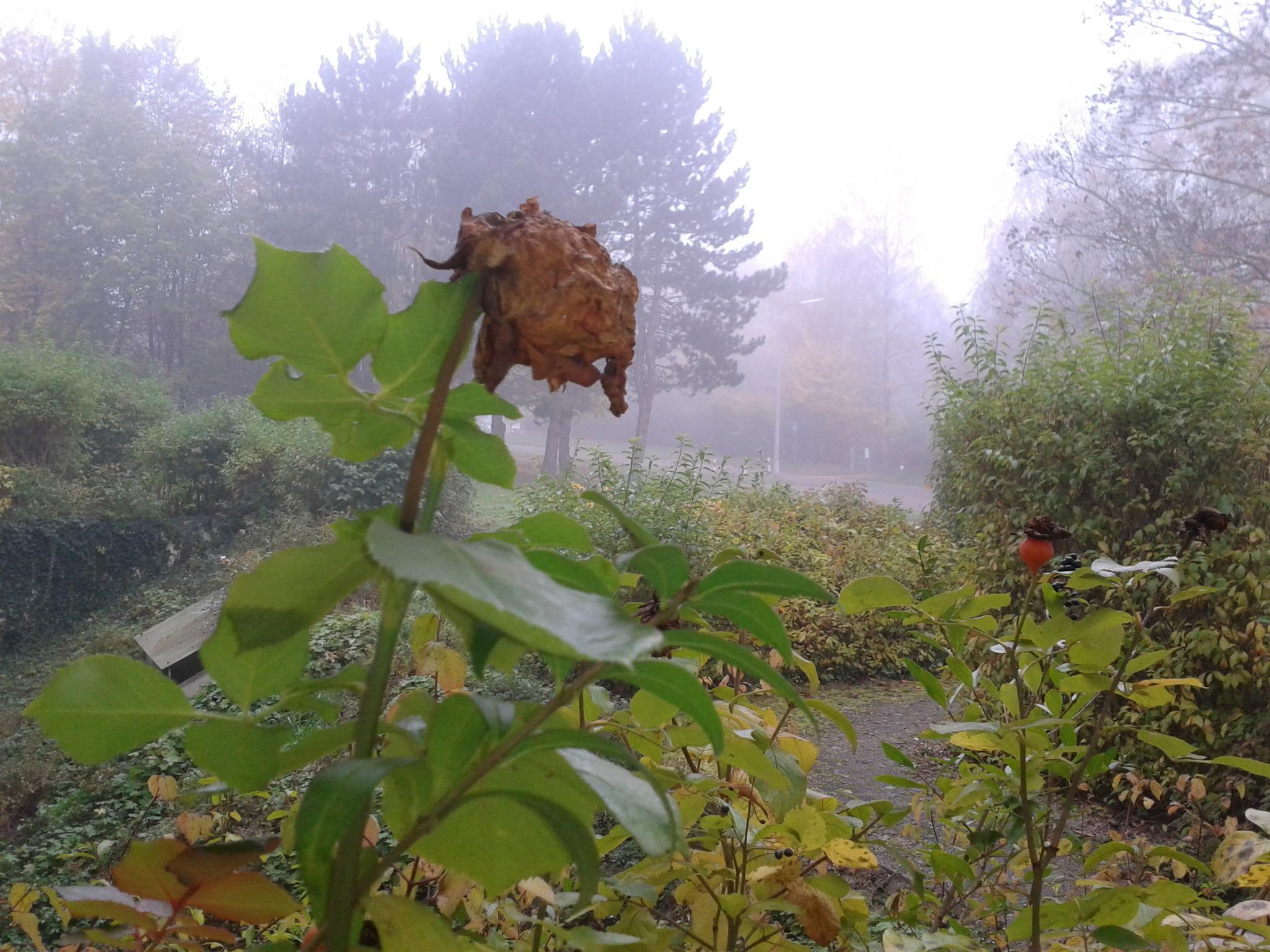 trauernde angehörige begleiten Stolberg