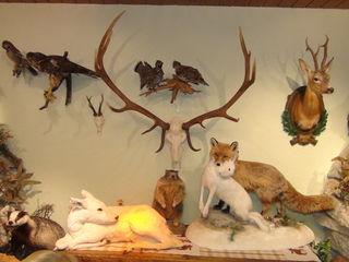 Die Jagd ist ein besonderes, stets aktuelles gesellschaftliches Thema.