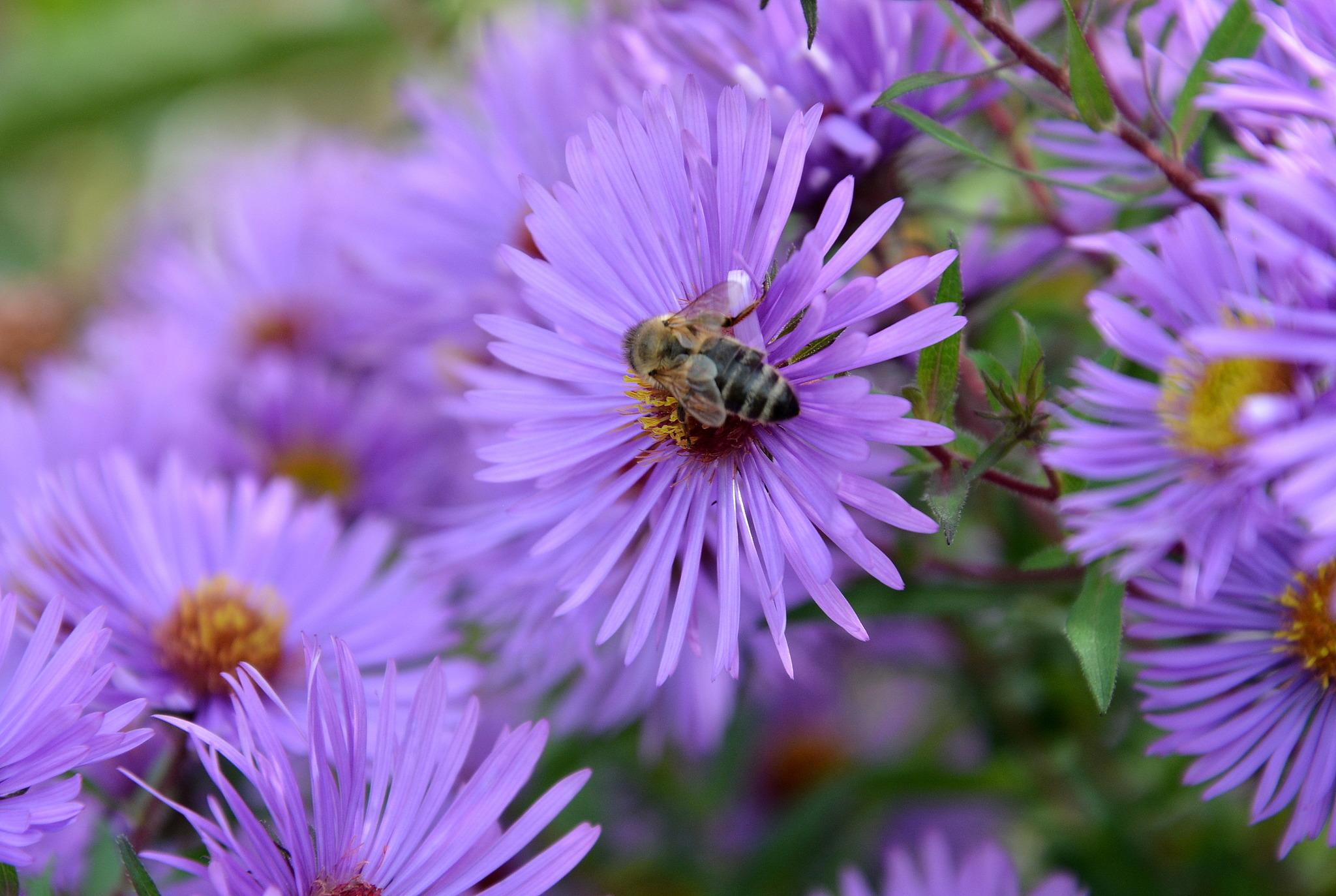 Insektenstiche Behandeln Wärme