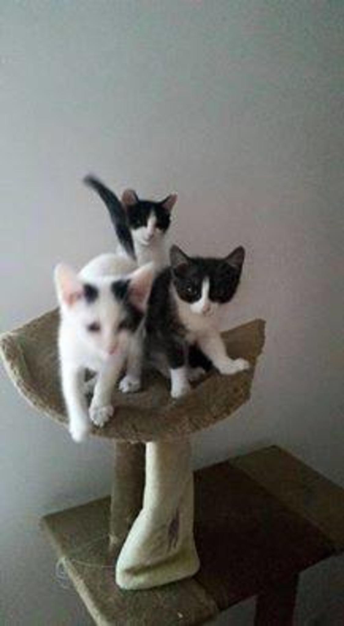 Gratis baby steiermark katzen Katzen vom