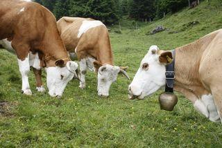Milchbauern aus der Region kämpfen mit Preisverfall ihrer Produkte.
