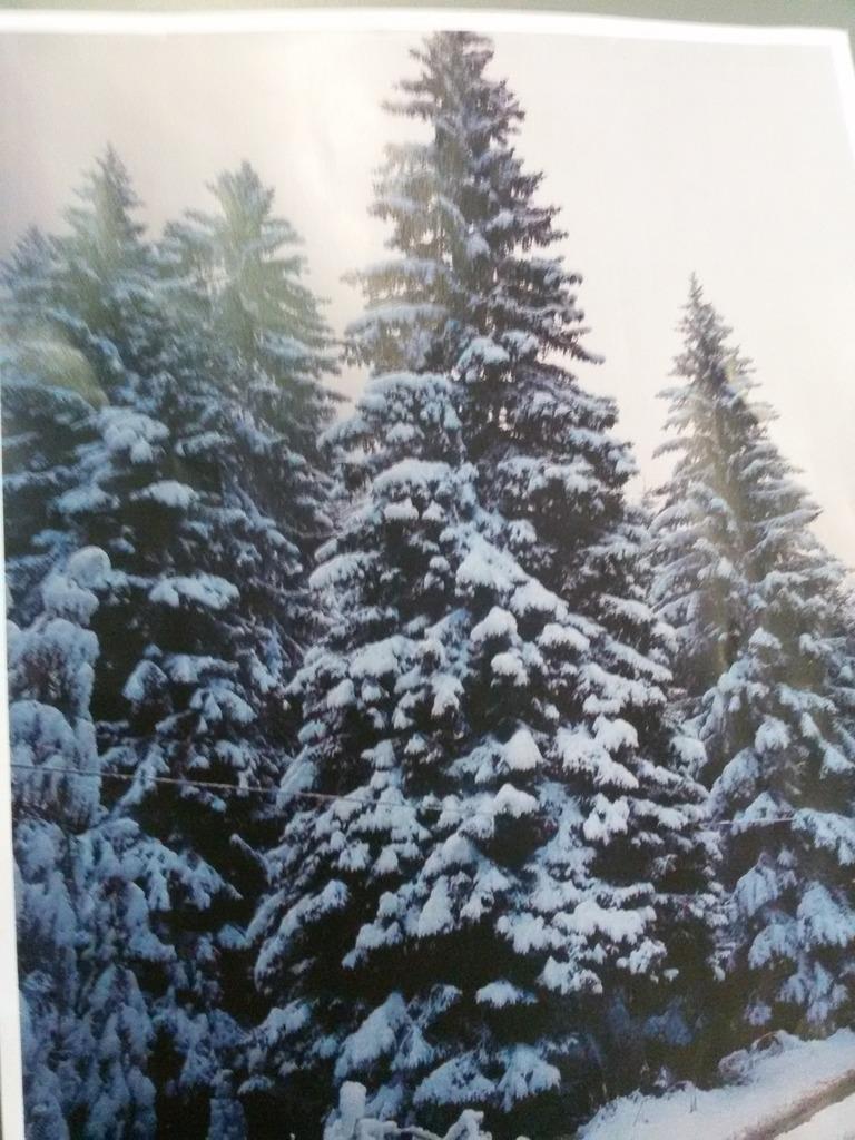 Wann Wurde Der Geschmückte Weihnachtsbaum Populär.Weihnachtsbaum Thema Auf Meinbezirk At