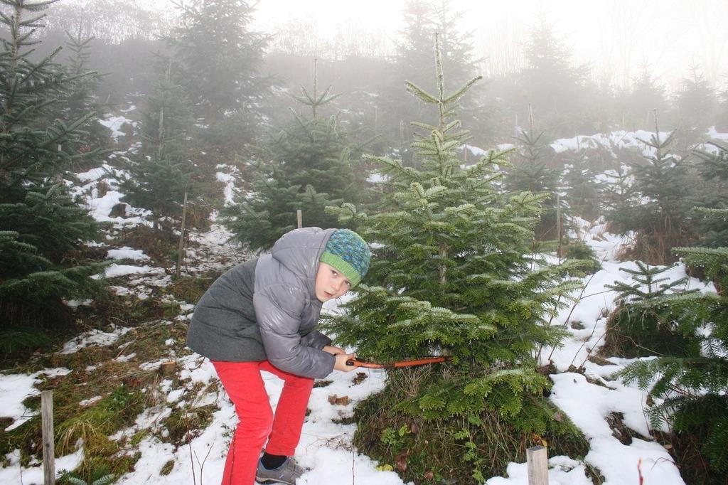 Weihnachtsbaum Selber Schneiden.Der Christbaum Zum Selberschneiden Klagenfurt