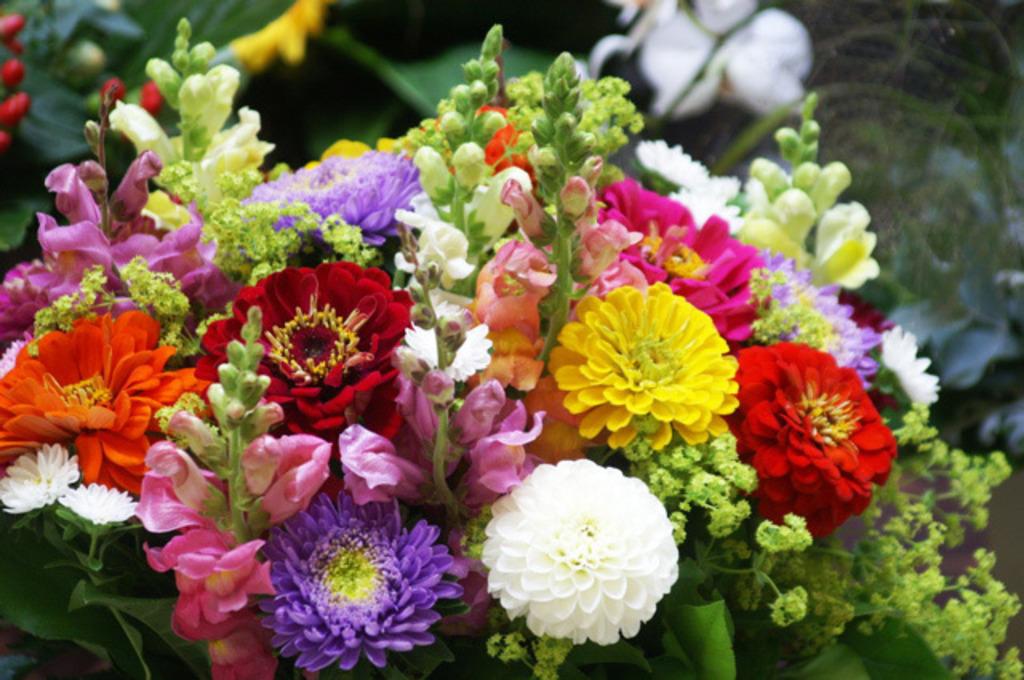Bald Wieder Blumen Im Gablitzer Zentrum Zu Kaufen Purkersdorf