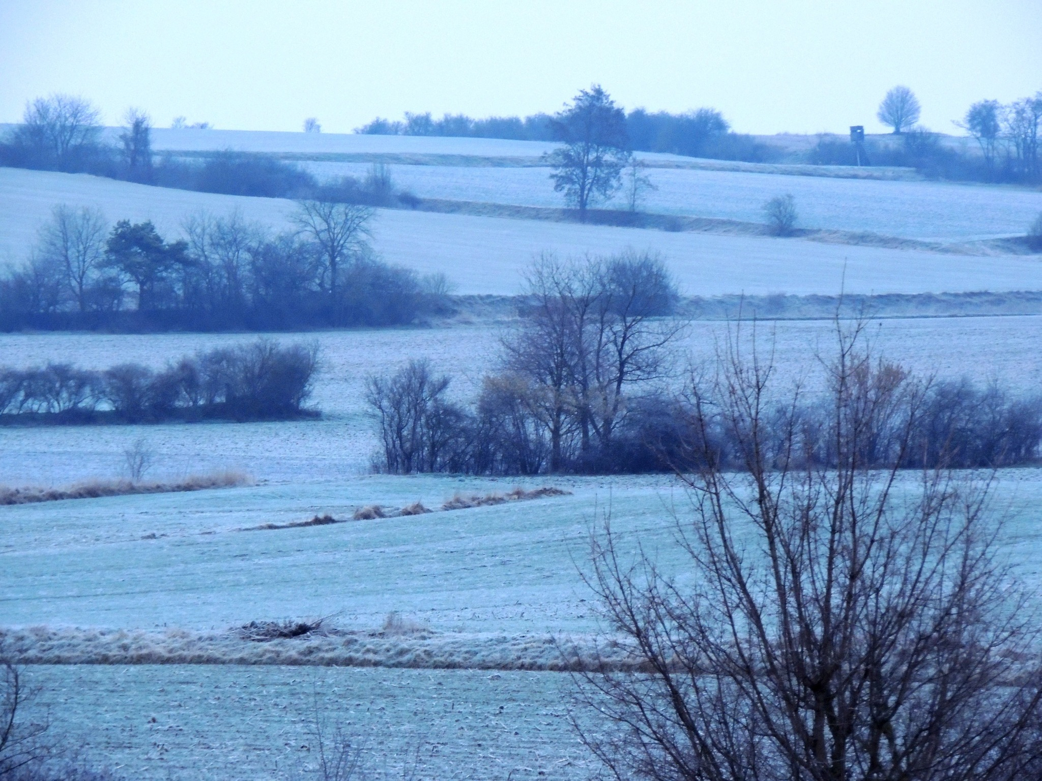 Frostigen Guten Morgen