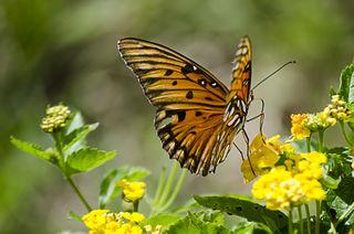 Mit einer App gegen das Schmetterlingssterben vorgehen - jetzt soll das möglich sein