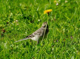 Große Blume kleiner Vogel