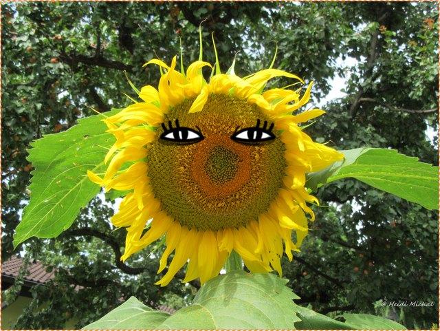 Sonnenblume In Wien Thema Auf Meinbezirk At