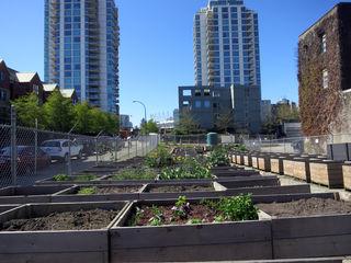 Gemüseanbau mitten in der Stadt boomt.
