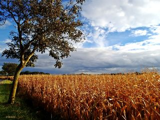 So schön hat Regionautin Birgit Winkler den Herbst eingefangen. Schick uns deine schönsten Herbstfotos und gewinne eine  Olympus TG 870 Wanderkamera