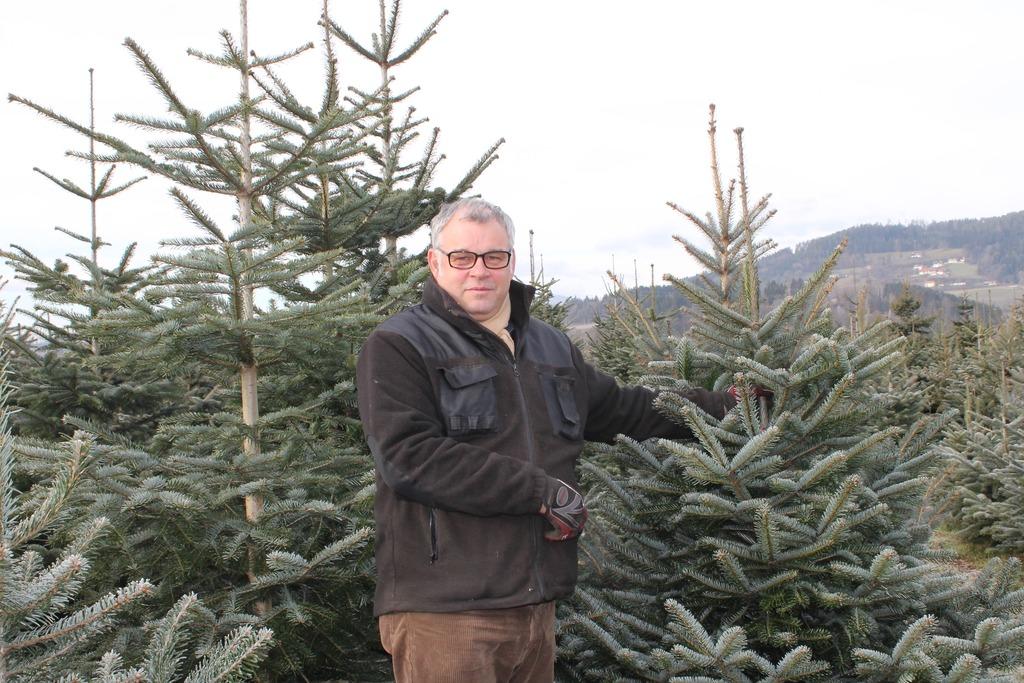 Weihnachtsbaum Selber Schneiden.Hier Holt Das Christkind Den Weihnachtsbaum St Veit