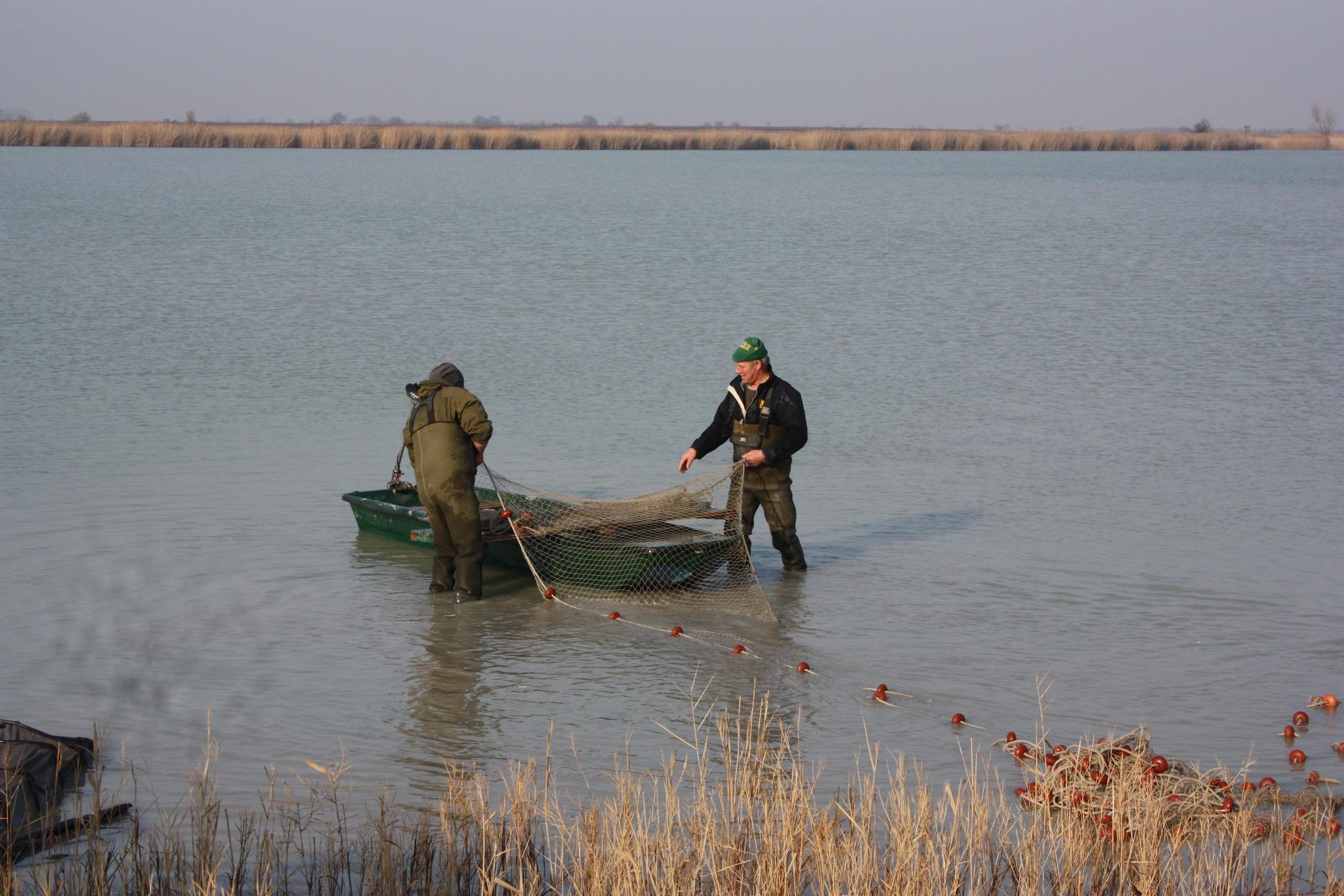 Abfischen am Darscho in Apetlon Neusiedl am See