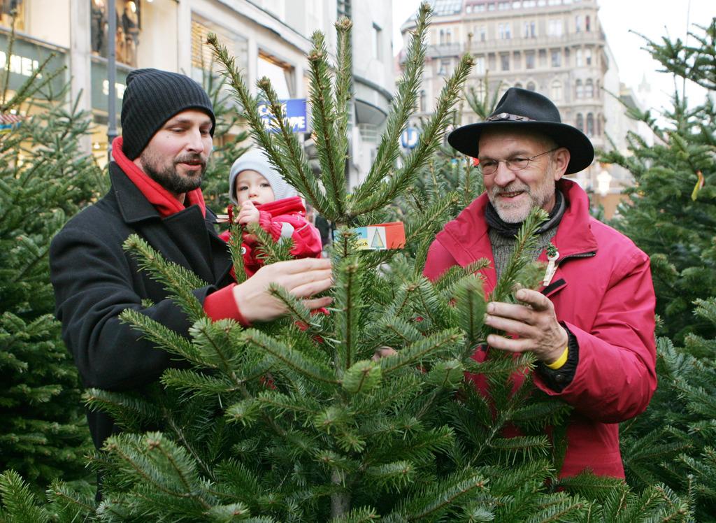 Wien Weihnachtsbaum Kaufen.Christbaum Tipps Für Den Kauf In Wien Meidling