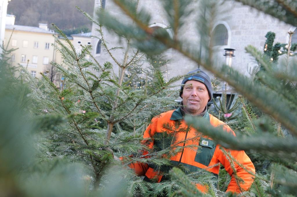 Die Weißtanne riecht wie das Weihnachten früherer Jahre - Salzburg-Stadt