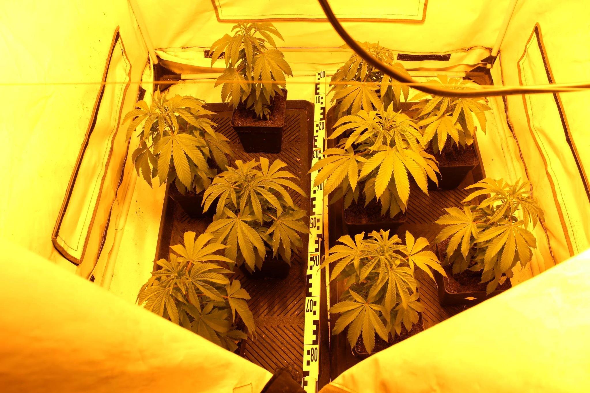 cannabis in sch tzen mehrere pflanzen und 100g bl ten in keller und auto entdeckt eisenstadt. Black Bedroom Furniture Sets. Home Design Ideas