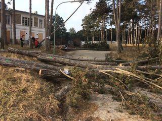 98 Bäume darf die Genossenschaft Gesiba für den Neubau von Wohnungen fällen.
