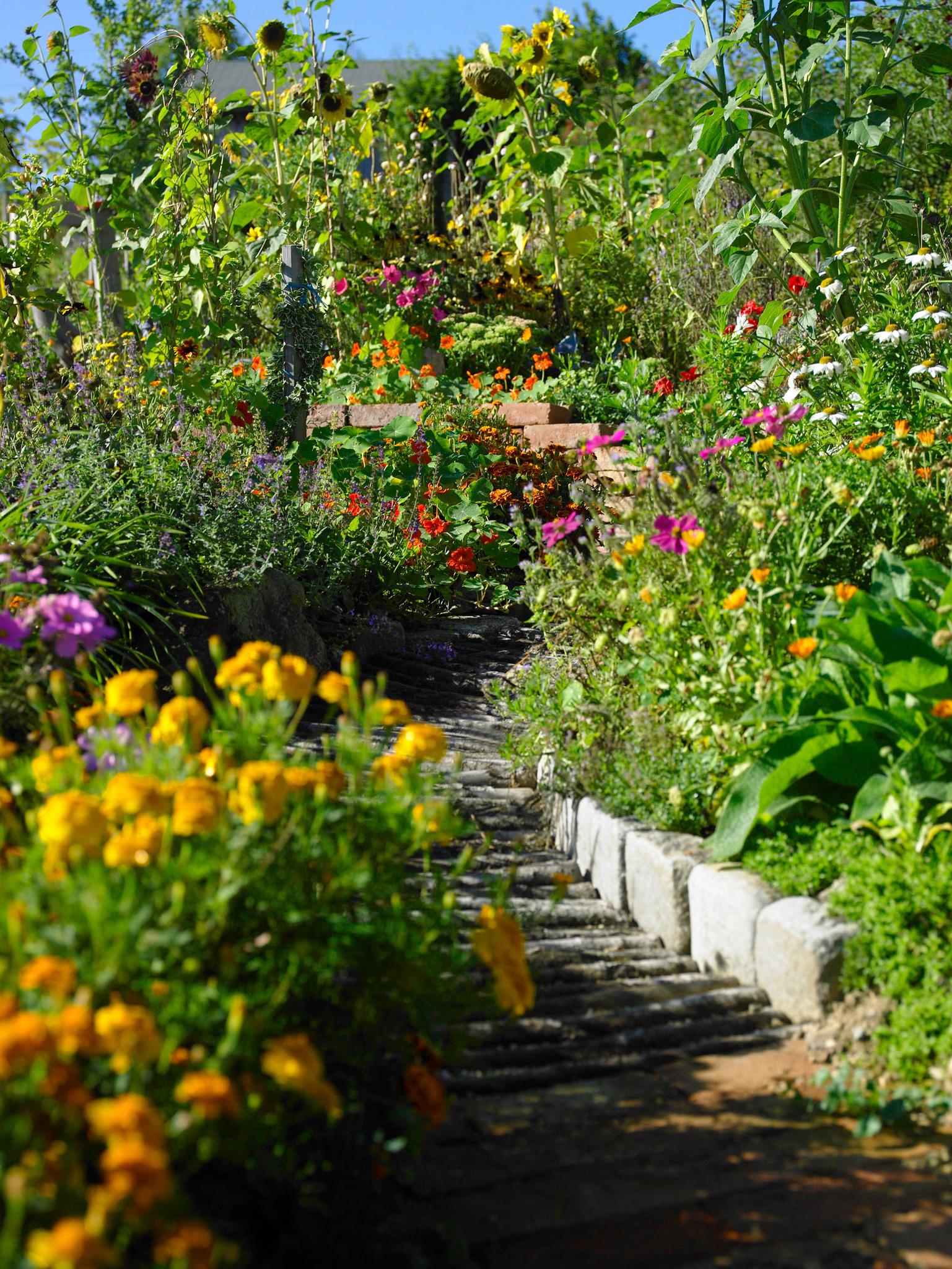 Warum Mischkultur Im Garten Sinnvoll Ist Niederösterreich