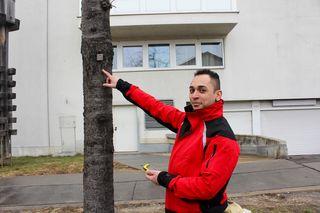 Martin Winhofer von der MA 42 leitet die Baumpflegemaßnahmen in der Reimmichlagsse - er zeigt, dass jeder Baum in Wien eine eigene Nummer hat