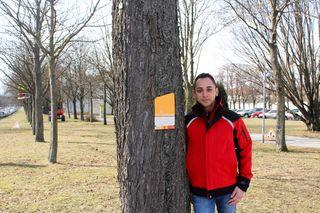 Martin Winhofer von der MA42 Wiener Stadtgärten mit seinem Baumpflegtrupp in der Schönbrunner Allee - sie ist das Wiener Naturdenkmal Nr. 556