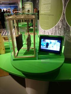 Die Ausstellung ist im Haus der Natur zu besichtigen.