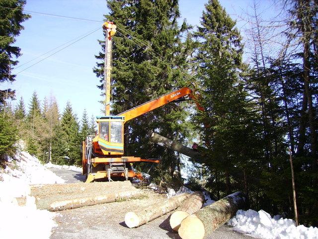 Holz ist ein wichtiger Wirtschaftsfaktor. Der Rohstoff wird teilweise in der Region verarbeitet. Die Wertschöpfung bleibt vor Ort