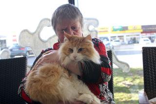Kater Buschl, die wunderschöne zweijährige Norwegische Waldkatze von Regina Lackner, leidet an einem Herzfehler.