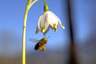 .....unsere fleißigen Bienen