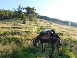 Pilgerreise mit Eselin Peppina von Dölsach nach Maria Zell.