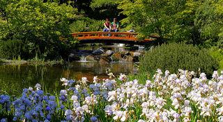 Eine Stunde Wellness für die Sinne und wenn man anschließend den Park verlässt, sieht die Welt gleich viel entspannter aus. Ein kleiner Park, der ein kleines Stück Japan nach Wien bringt 全日本書道教育教会