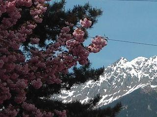 """Hellblauer Himmel, angezuckerte Gipfel und blühende Frühlingsblumen – dieses Bild erinnert an die Landschaften in """"The Sound of Music""""."""