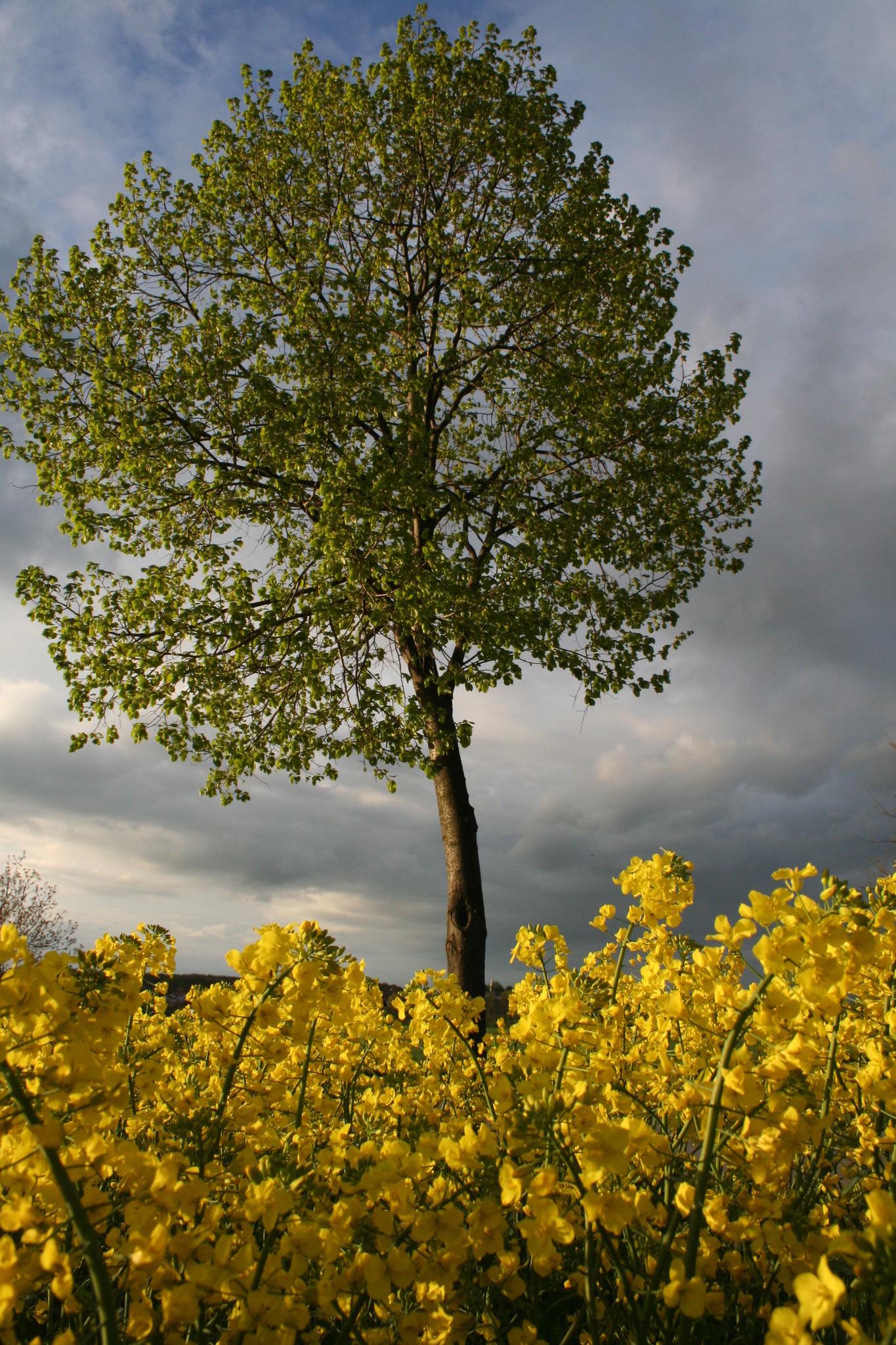 Burgenland-Flirt mit Sonne drin - Mattersburg - comunidadelectronica.com