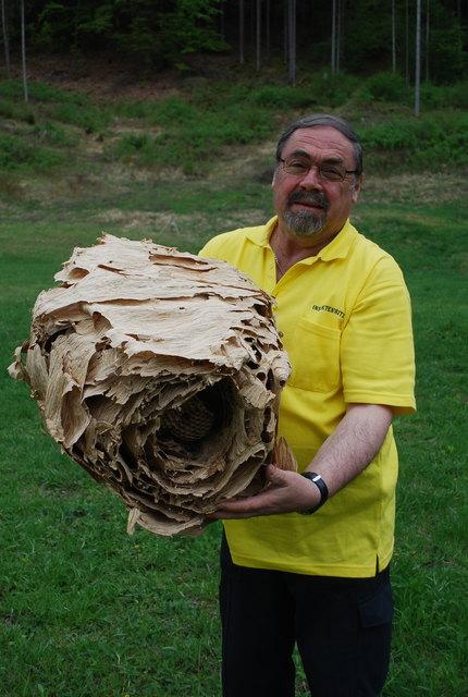"""""""Insektenfritz"""" Friedrich Kach mit einem alten Hornissennest"""